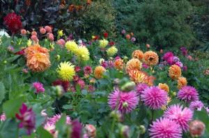 magija ljetnjeg cvijeca