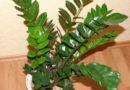 Feng shui – sobne biljke kao snazni aktivatori