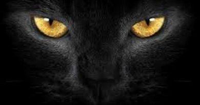 OTKRIJTE Da Li Zaista Crna Mačka Donosi  Nesreću – Što znači kad vidite crnu mačku