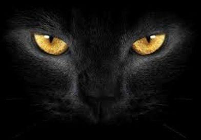 Što znači kad vidite crnu mačku