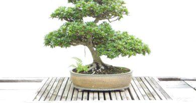 Feng shui – 10 savjeta za uredjenje doma