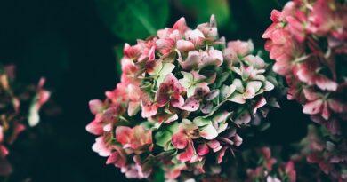 Provjerite šta vam predvidja vječni narodni kalendar Roždanik